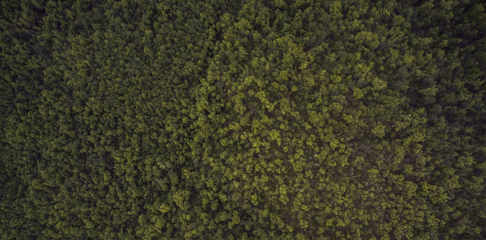 green tree tops seen from above