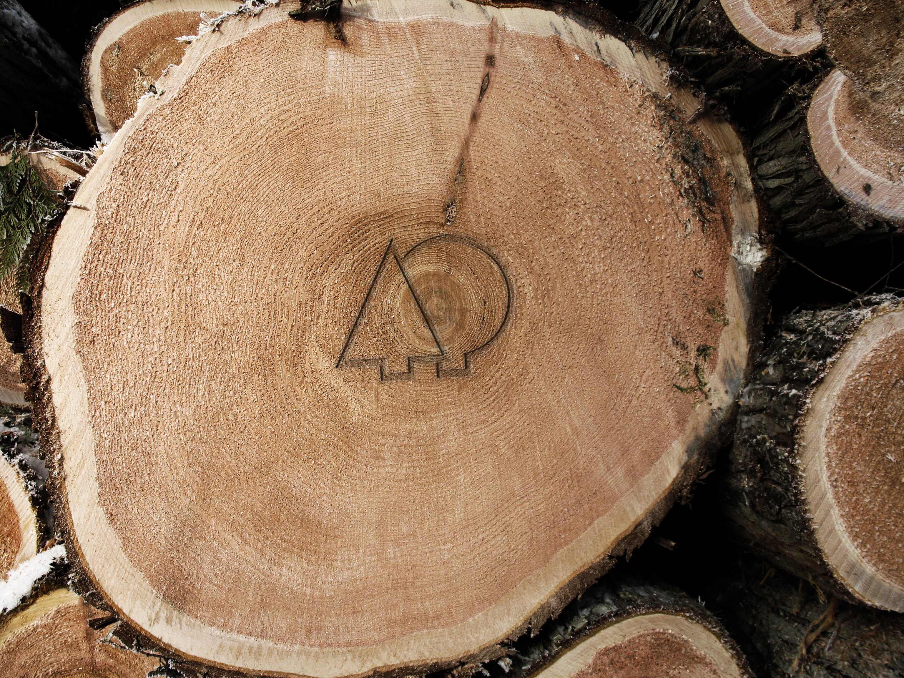 wooden cellmark tree logo